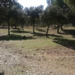 Repoblación arbórea